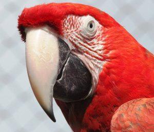 macaw-20282_640